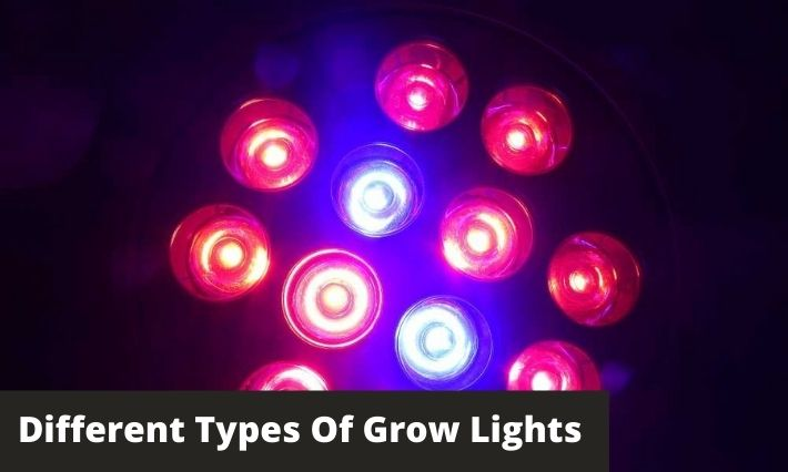 Different Types Of Grow Lights