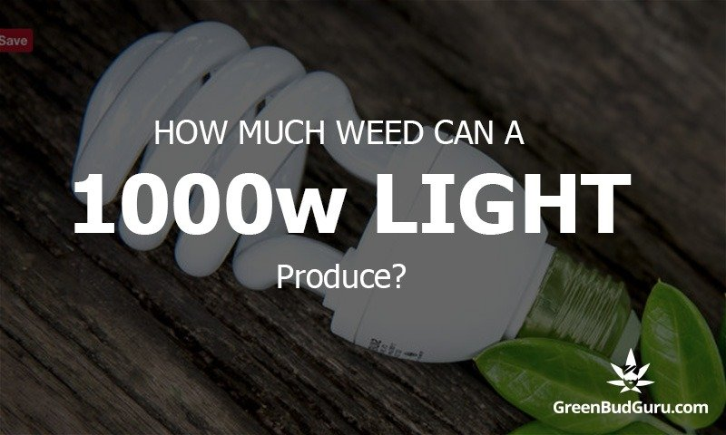 How much weed can a 1000 watt light produce