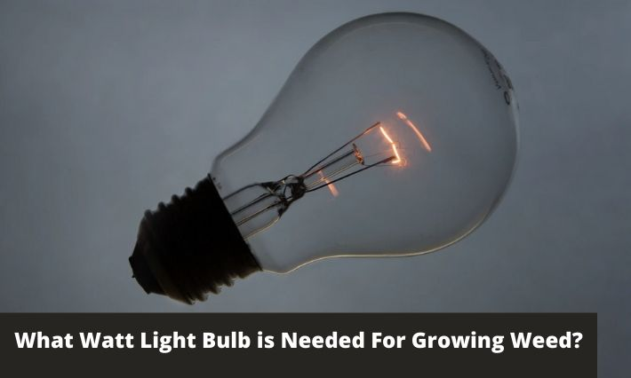 What Watt Light Bulb is Needed For Growing Weed?