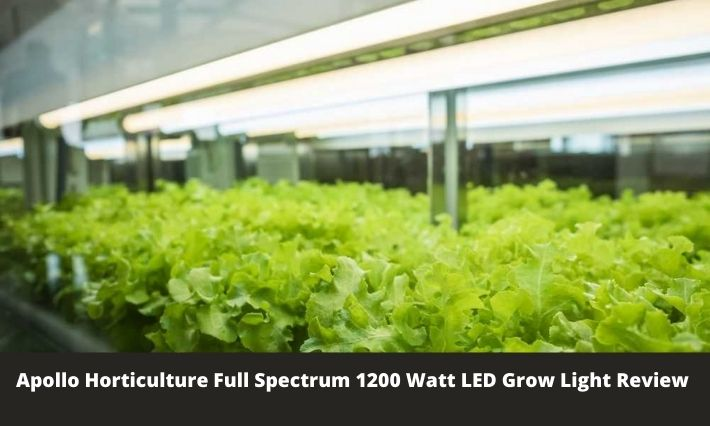 Apollo Horticulture Full Spectrum 1200 Watt LED Grow Light Review