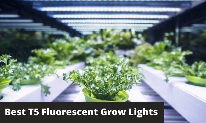 Top 3 Best T5 Fluorescent Grow Lights