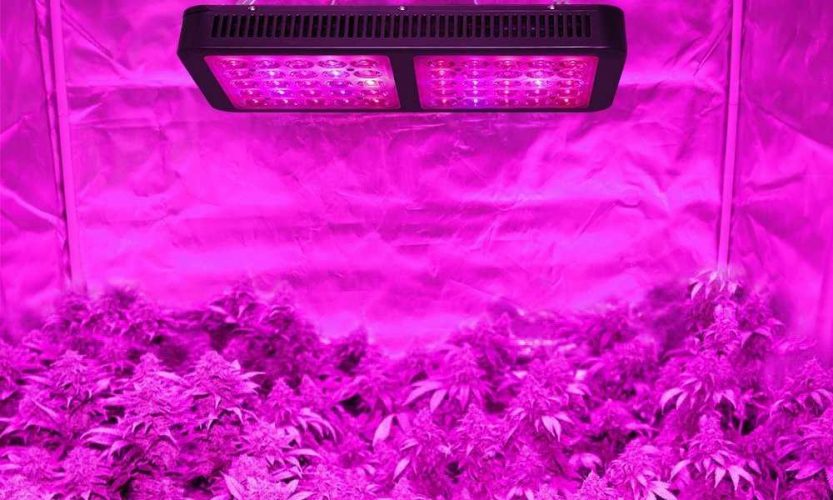 Best Rated LED Grow Lights Sun-Like Effects in a Compact Package