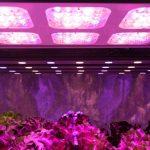 Energy Efficient Grow Lights: How Do They Work?