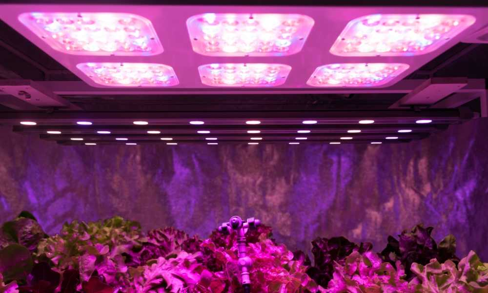 Energy Efficient Grow Lights How Do They Work