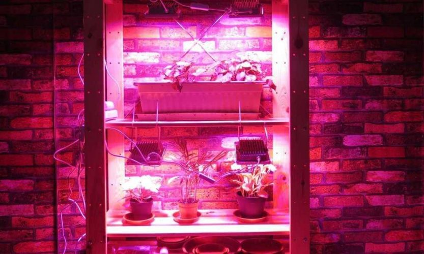 What to Look for in LED Grow Lights: A Beginner's Guide