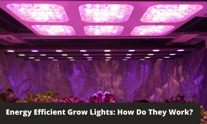 Energy Efficient Grow Lights: How Do They Work?