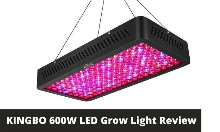 KINGBO 600W LED Grow Light Review