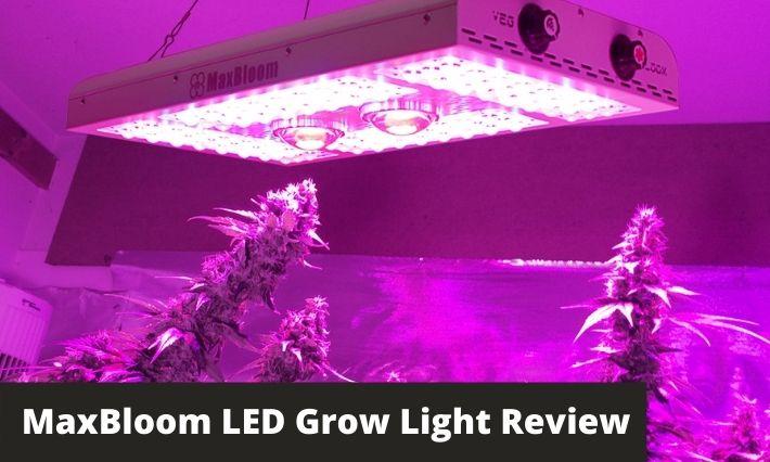 MaxBloom LED Grow Light Review: An Efficient COB LED Grow Light?