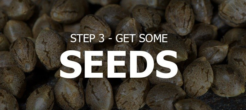 Get Some Seeds