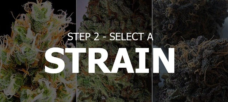 Select A Strain