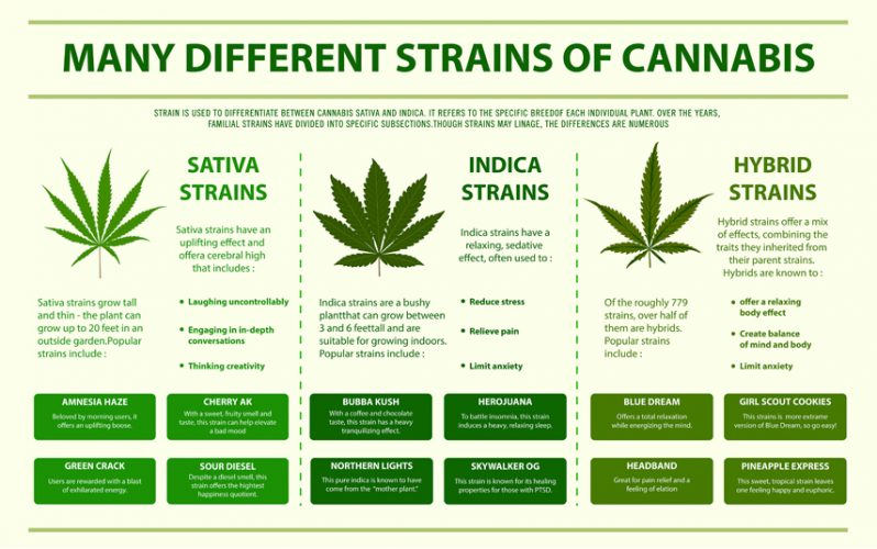 How Strains Differ Things A Budtender Should Know