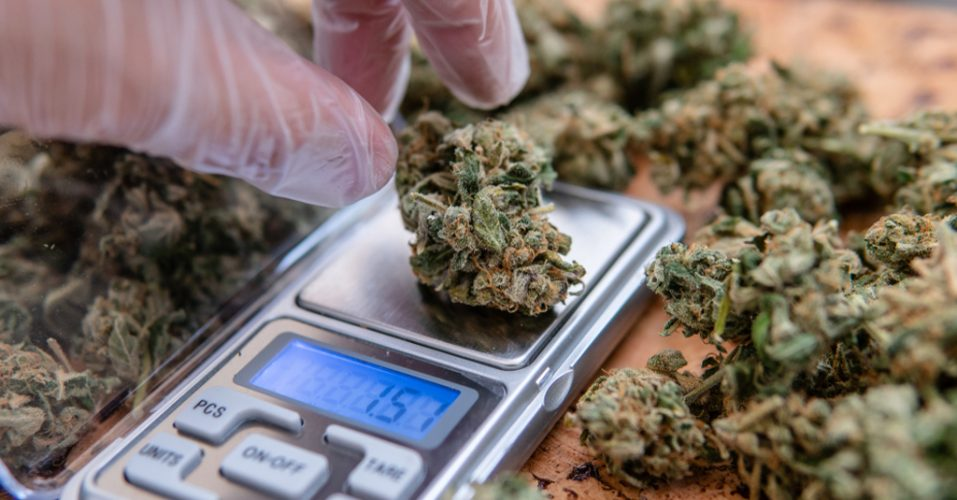 How To Use Scales 13 Things A Budtender Should Know