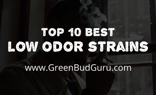 Best Low Odor Strains