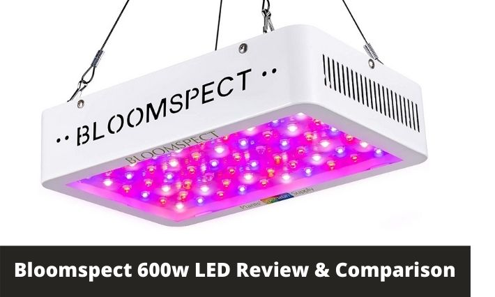 bloomspect 600w led review and comparison