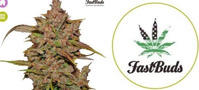 crystal meth high yield autoflower strain
