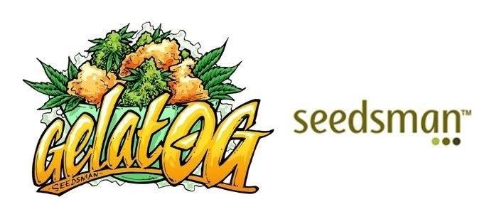 gelat-og-seedsman-highest-yielding-strain