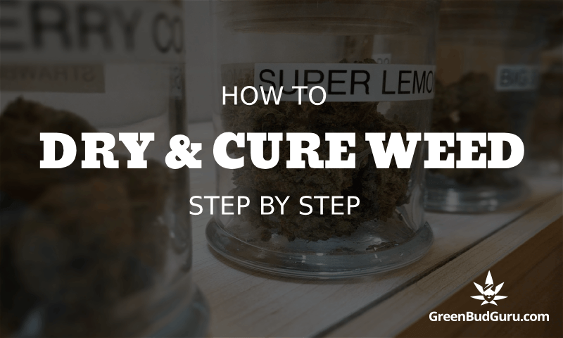 How to dry and cure weed step by step