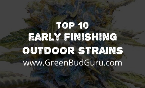 Early Finishing Outdoor Strains