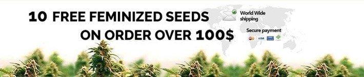 Discounts Promotions Dutch Seeds Shop Review
