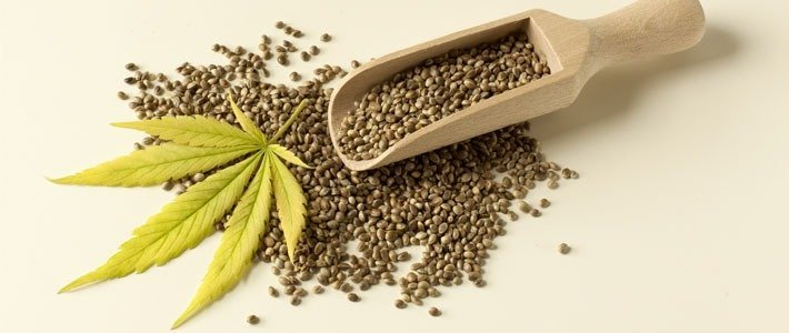 Seed Quality Amsterdam Marijuana Seeds Review