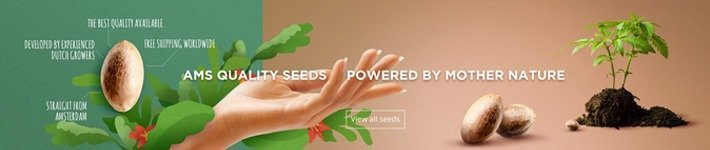 Seeds Reliability Amsterdam Marijuana Seeds Review