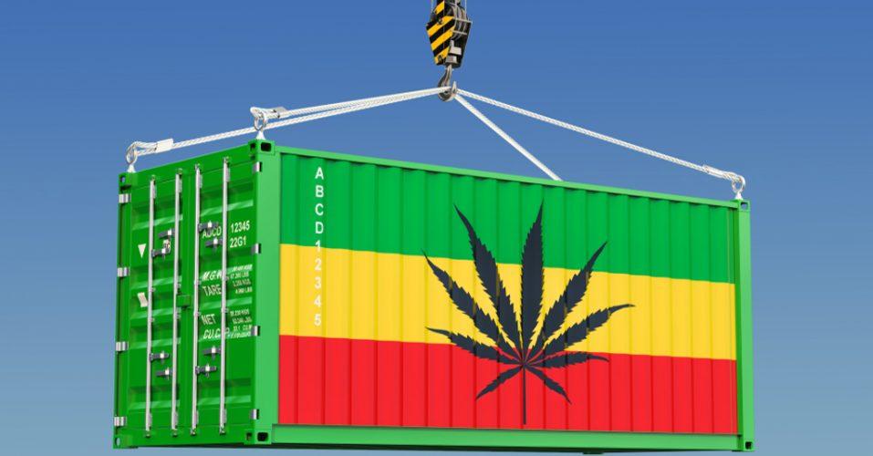 Shipping Sensi Seeds Bank Revew
