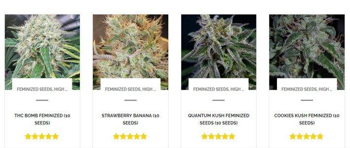 Strain Selection Dutch Seeds Shop Review