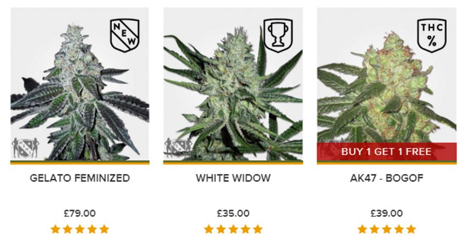 Strain Selection MSNL Seeds Review