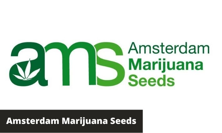 amsterdam marijuana seeds review