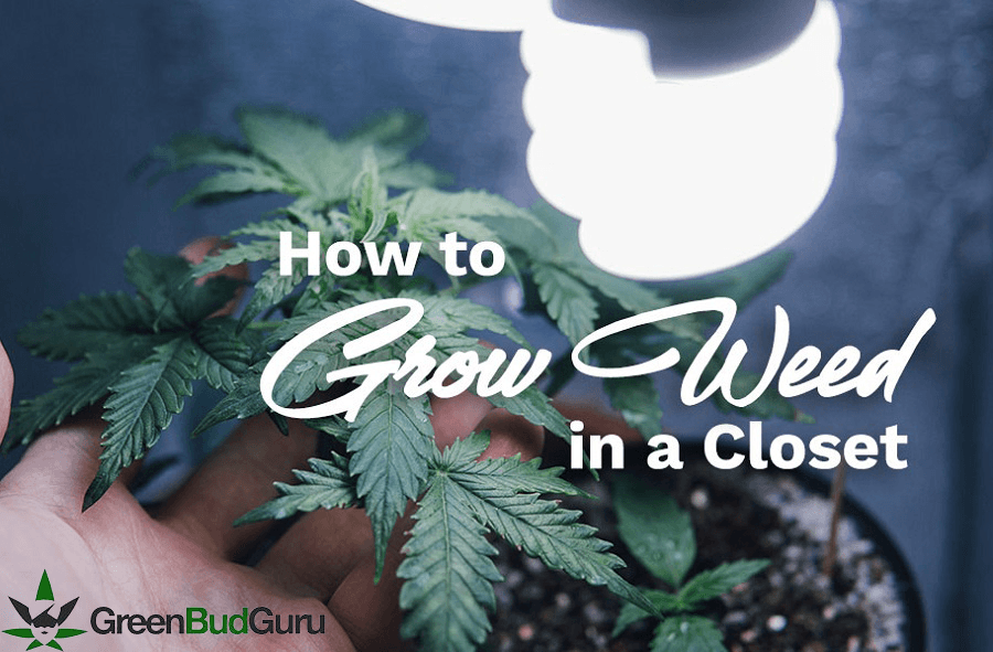 How To Grow Weed In Closet: Fast And Efficient Guide