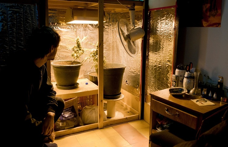 Man Looking At Weed In Closet