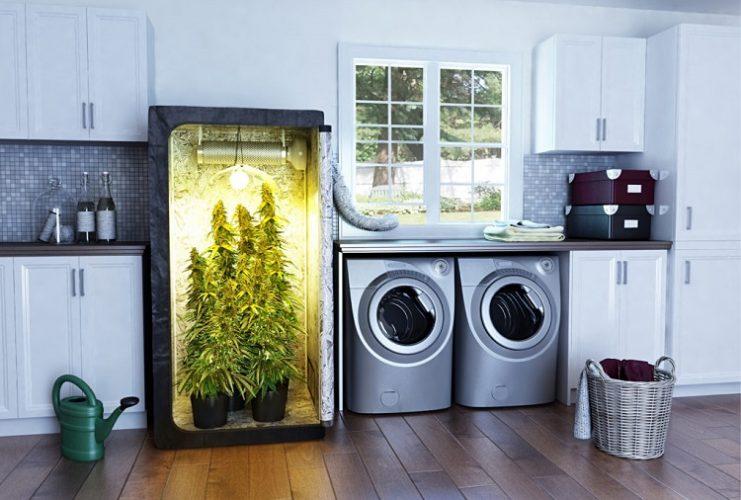 Grow Tent For Marijuana