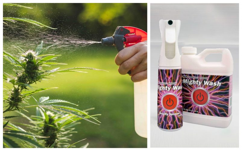 Using Mighty Wash On Cannabis