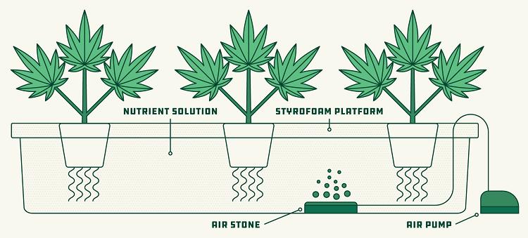 Marijuana Hydroponics System