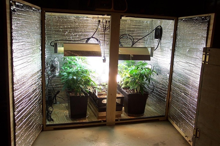 Growing Weed In Closet