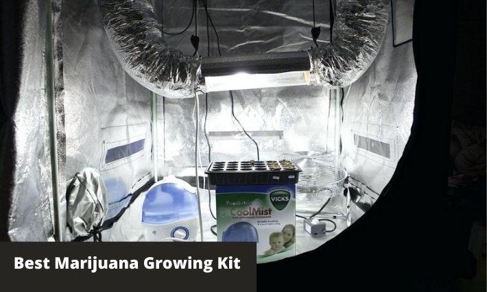 best marijuana growing kit