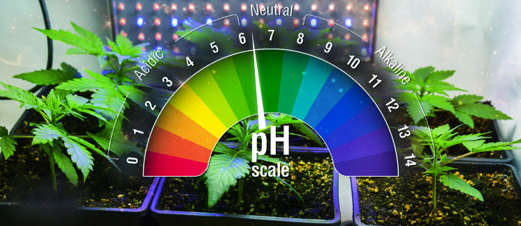 Ideal pH For Cannabis