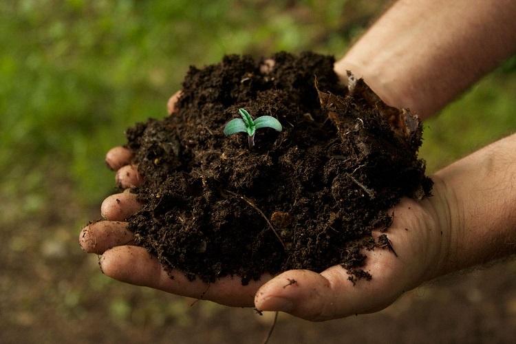 Marijuana Growing Soil