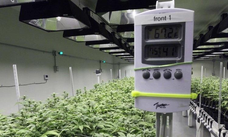 Growing Room Temperature