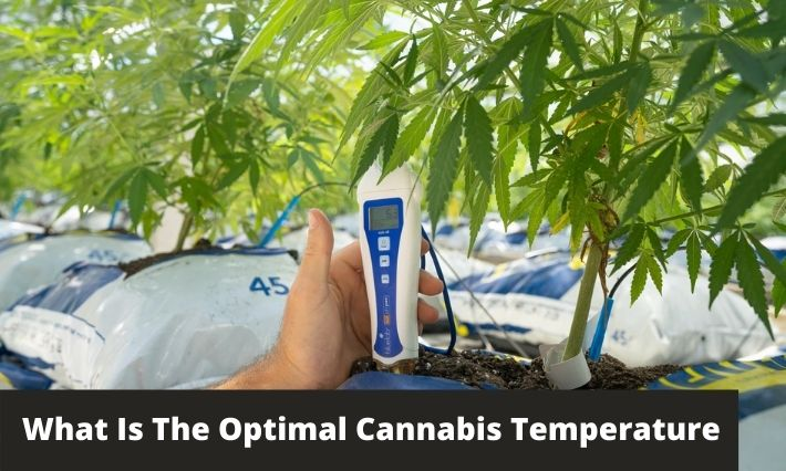 What Is The Optimal Cannabis Temperature