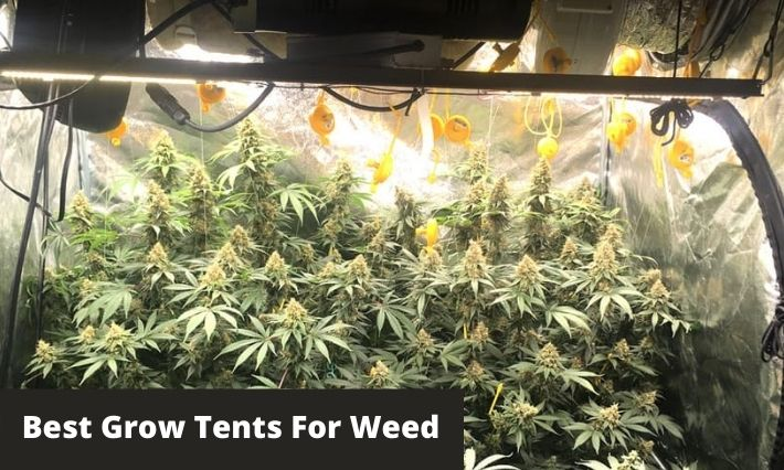 Best Grow Tents For Weed