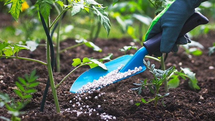 Cannabis Fertilizer