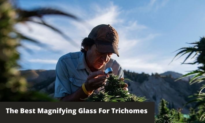 the best magnifiying glass for trichomes
