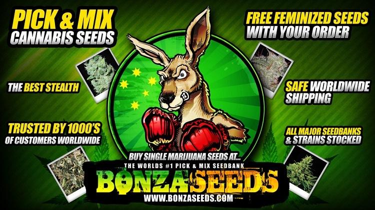 Bonza Seeds History