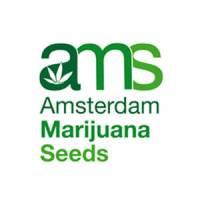 Amsterdam Marijuana Seeds