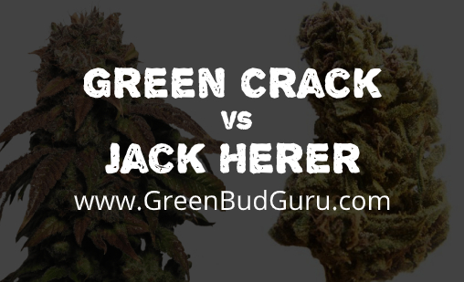 Green Crack vs Jack Herer