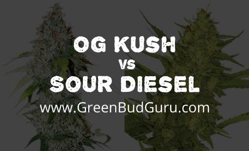 OG Kush vs Sour Diesel
