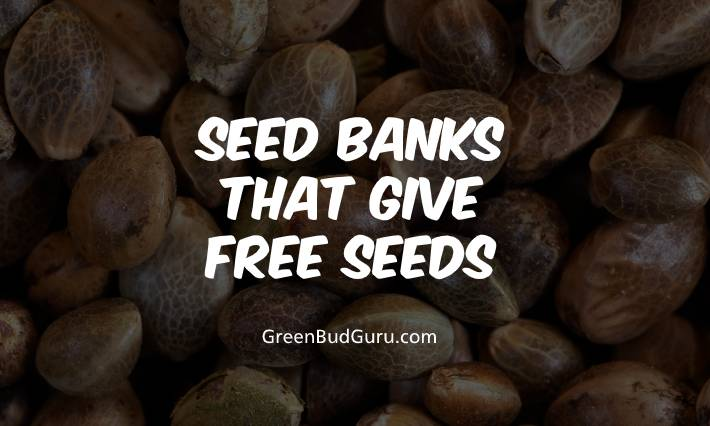 Seed Banks That Give Free Seeds