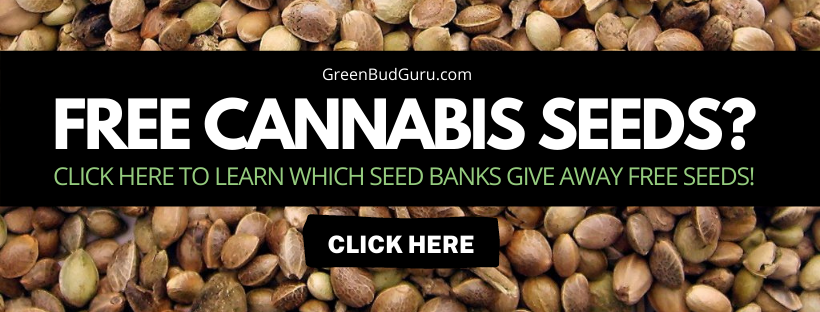 free cannabis seeds