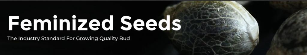 ILGM Feminized Seeds